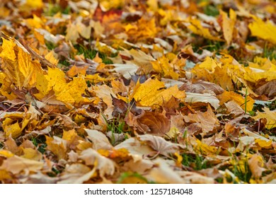 Golden autumn in park, sunny day, clear weather, reflections, leafs on the ground, yellow color