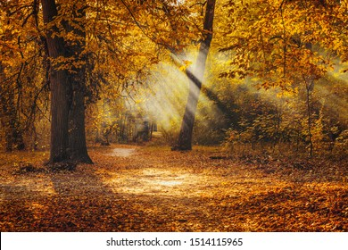 Golden autumn in the park. Vibrant fall scene with trees covered by yellow leaves and sun rays.