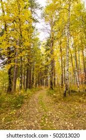 Golden autumn in pine and birch forest