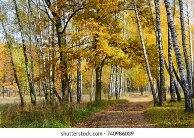 Golden autumn. Road in autumn deciduous forest