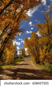 Golden Autumn Road to Mesa Verde National Park
