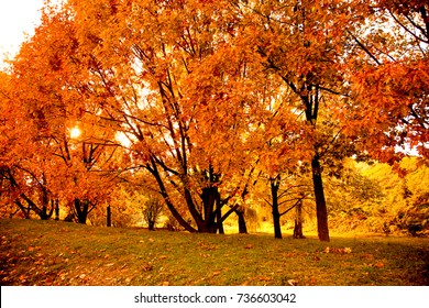 Golden Autumn Scene in a Park, with Falling Leaves, Sun shining through the Trees