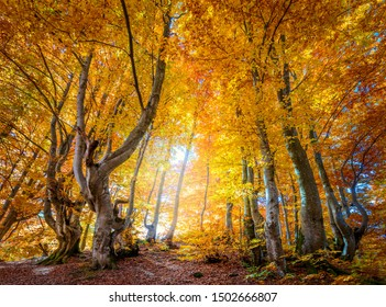 Golden Autumn season in wild forest - vibrant leaves on trees, sunny weather and nobody, real fall nature landscape