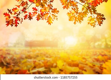 Golden autumn sunset colorful tree leaves background