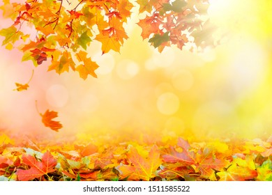 Golden autumn sunset with multi colored tree leaves background