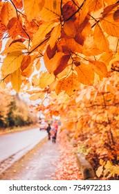 golden autumn walk