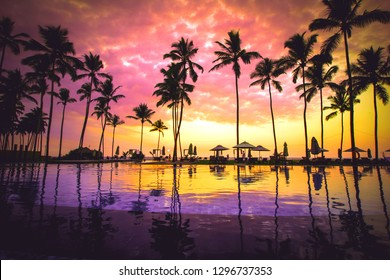 Golden beach with amazing palm trees