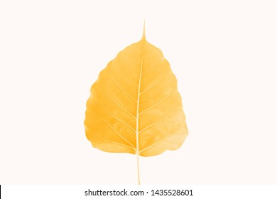 Golden Bodhi leaves on a white background