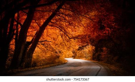 golden bronze autumn forest