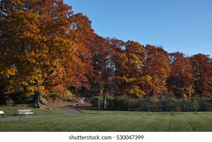 Golden brown trees on a sunny autumn day in New York botanical garden, Bronx