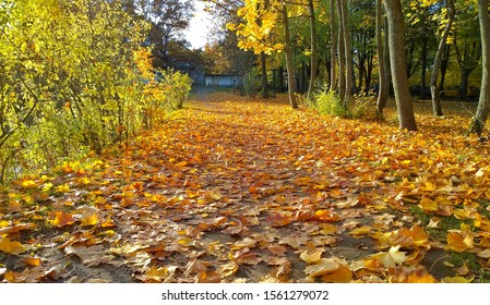 Golden carpet of fallen yellow orange and maple leaves on the ground. Autumn background. Fall landscape in the city park. Beauty of life on Earth. Protect and love nature and the world. Walkway path.