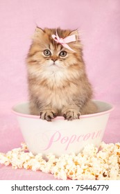 Golden Chinchilla Persian kitten sitting inside popcorn bowl on pink background