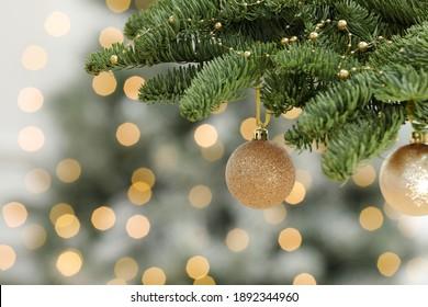 Golden Christmas balls hanging on fir tree against blurred festive lights
