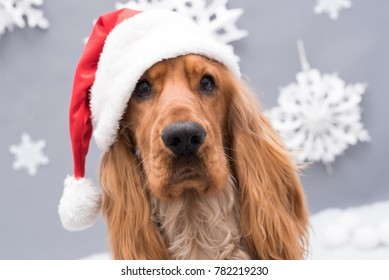 A Golden Cocker Spaniel dog wearing a Santa hat with white snowflakes in the background