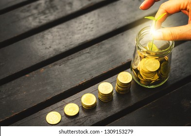 golden coin stack with beautiful woman hand put coin and holding green plant in jar on wood table flat lay background in park. growth business financial saving marketing concept for investment budget.