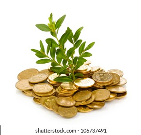 Golden coins and plant isolated on white