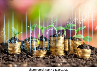Golden coins in soil with young plant isolated. Money growth