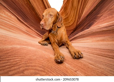 golden color dog laying in Coyote Butte