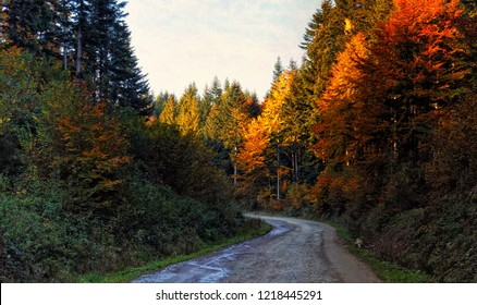golden colors of the autumn forest