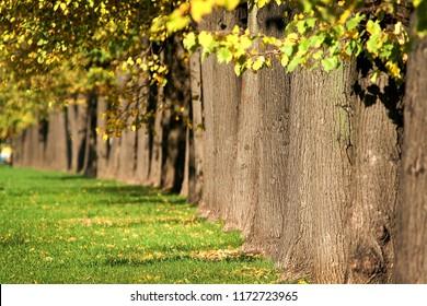 Golden colors of autumn. Russia
