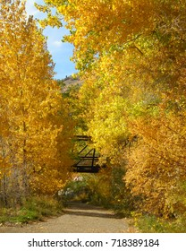 Golden Cottonwood trees in Fall along dirt path with suspended footbridge
