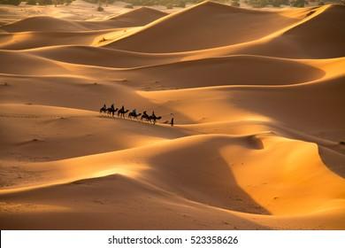 The golden dunes of Erg Chebbi, Morocco