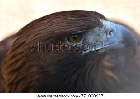 Atentie la pana de vulture online dating
