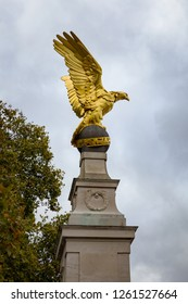 Golden eagle in London, UK
