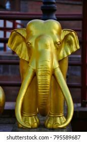 golden elephant in natural background