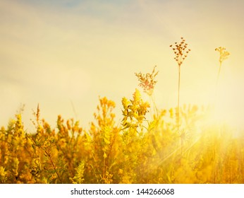 Golden evening on the meadow, rural summer backgrounds