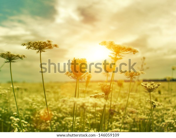Golden evening on the summer meadow, natural landscape