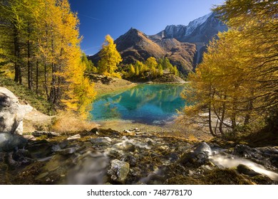 The Golden Fall arrived in Switzerland and the forest turns yellow before Winter puts the landscape for several months asleep. A wonderful time in the mountains that guarantees for magnificent views.