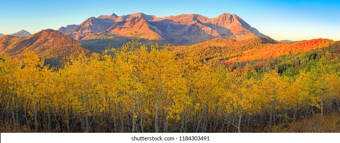 Golden fall landscape in the Wasatch Mountains, Utah, USA.