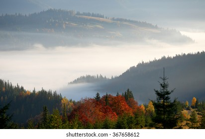 Golden fall in the mountains. Morning fog. European Carpathians