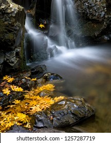 Golden fallen autumn leaves collect at the base of waterfall:  Granuja Falls of Uvas Canyon, California