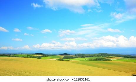 golden farms in Hokkaido, Japan