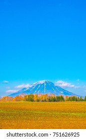 golden field with beautiful active volcano of Mount Yotei (Mt. Yotei). Mount Yotei is an active stratovolcano located cover Fukidashi park and Shiribetsu park. Mt. Yotei with orange red leaves tree.