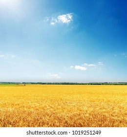 golden field with harvest and deep blue sky with sun