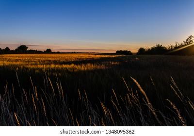 Golden fields of summer