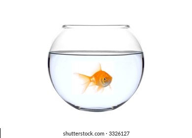 A golden fish in a bowl against white background