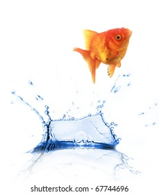 Golden fish Carassius auratus jumping out of water