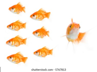 Golden fish concept