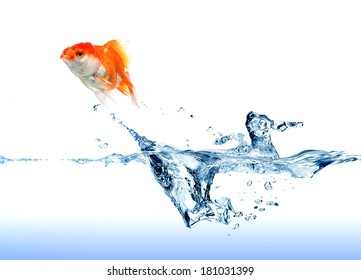 A  golden Fish  jumping out of the water on white