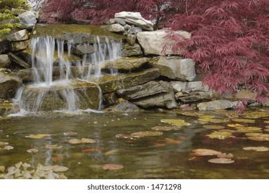 Golden fish swim below a waterfall in this garden pond