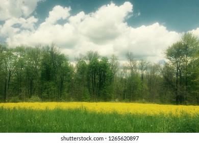 Golden flower bloom yellow