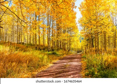 Golden forest landscape in Aspen, Colorado maroon bells mountains in October 2019 and vibrant trees foliage autumn with dirt road
