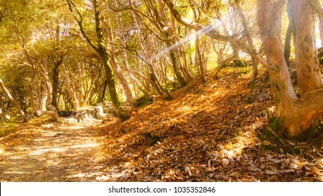 Golden forest with sun ray in side.