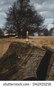golden fork in tree trunk
