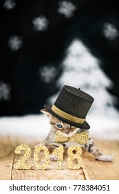 golden glitter 2018 with a cat with hat