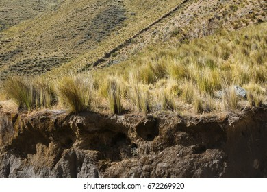 Golden grass in the Andes